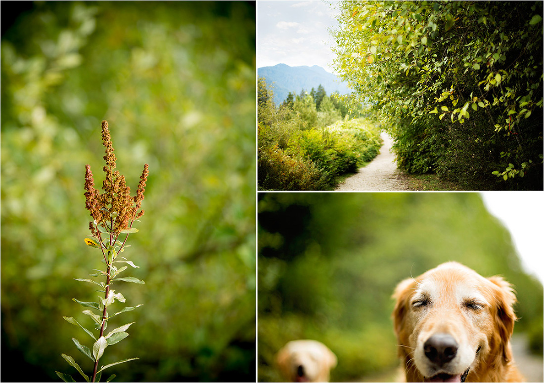 dog photography in north vancouver powerline trail