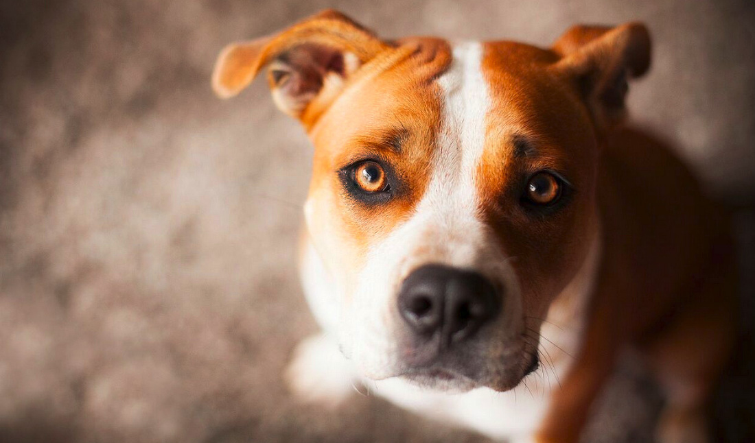 chia, dog, photoshoot, vancouver, pet photography