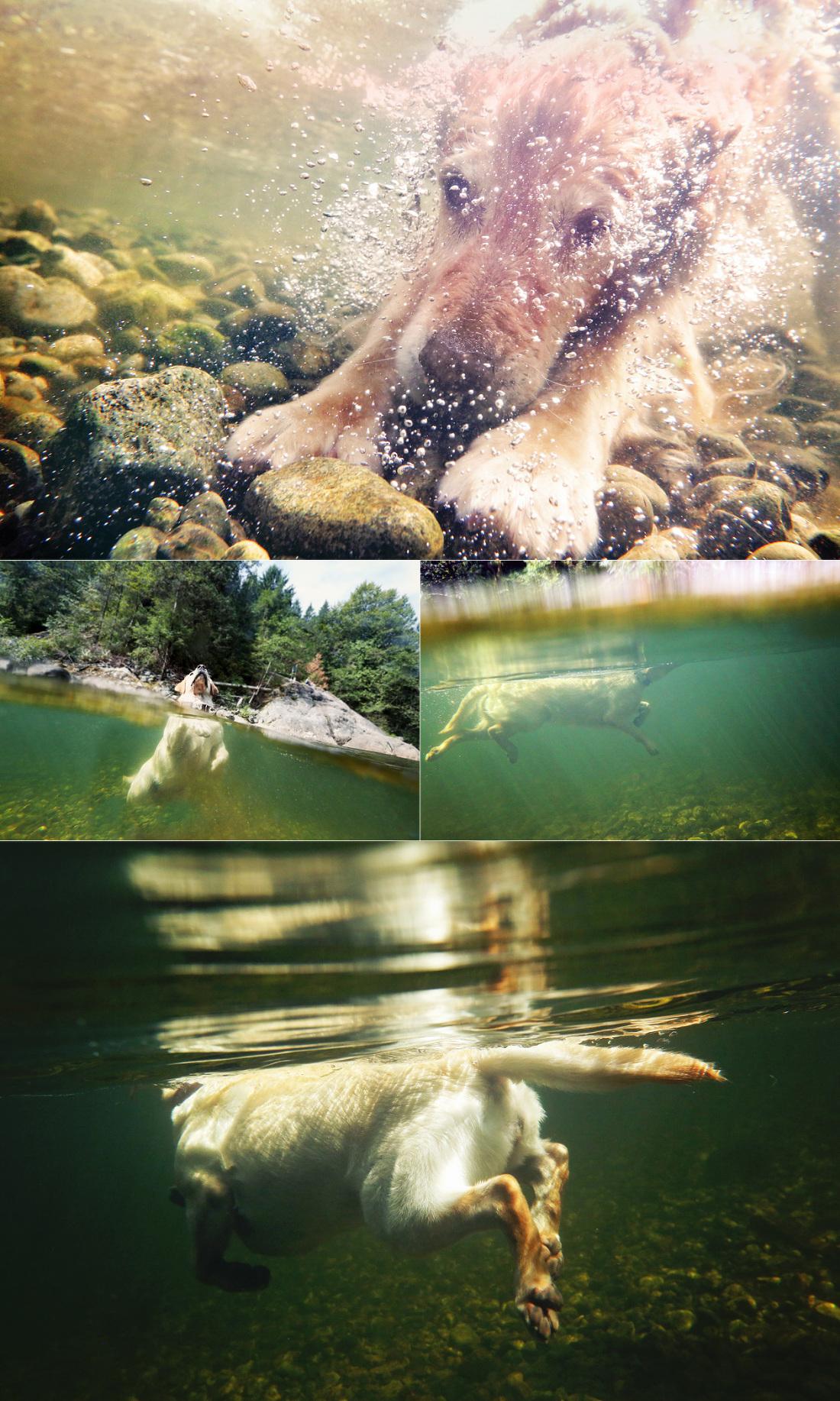 underwaterdogs2