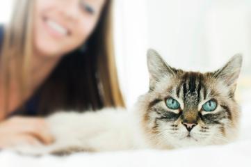 cat photoshoot, professional cat photography